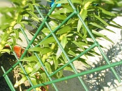Tuteurage pour plantes
