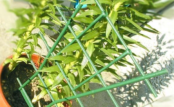 Echelle design pour plante grimpante d'interrieur ou en jardin