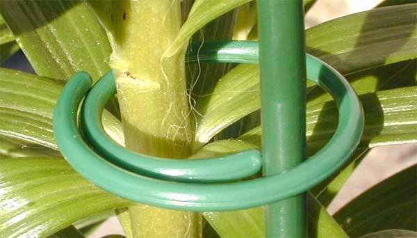 Attache innovante pour plantes TutoSpire