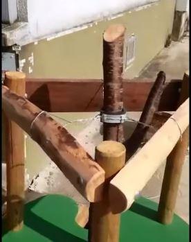 Collier de tuteurage - tuto : la pose en tripode